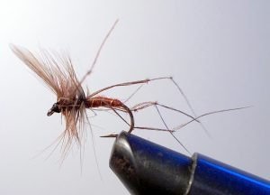 DADDY LONG LEGS BROWN BODY (SIZE 10) Dry